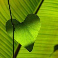 Un coeur OUvert